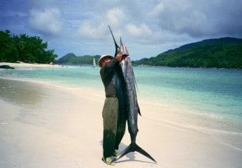 giant sailfish